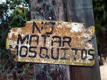 No matar mosquitos
